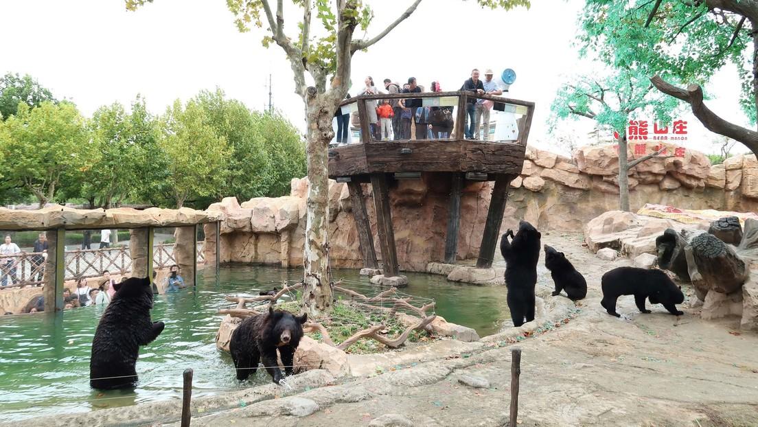 Osos matan a un cuidador a la vista de varios turistas en un parque para animales salvajes