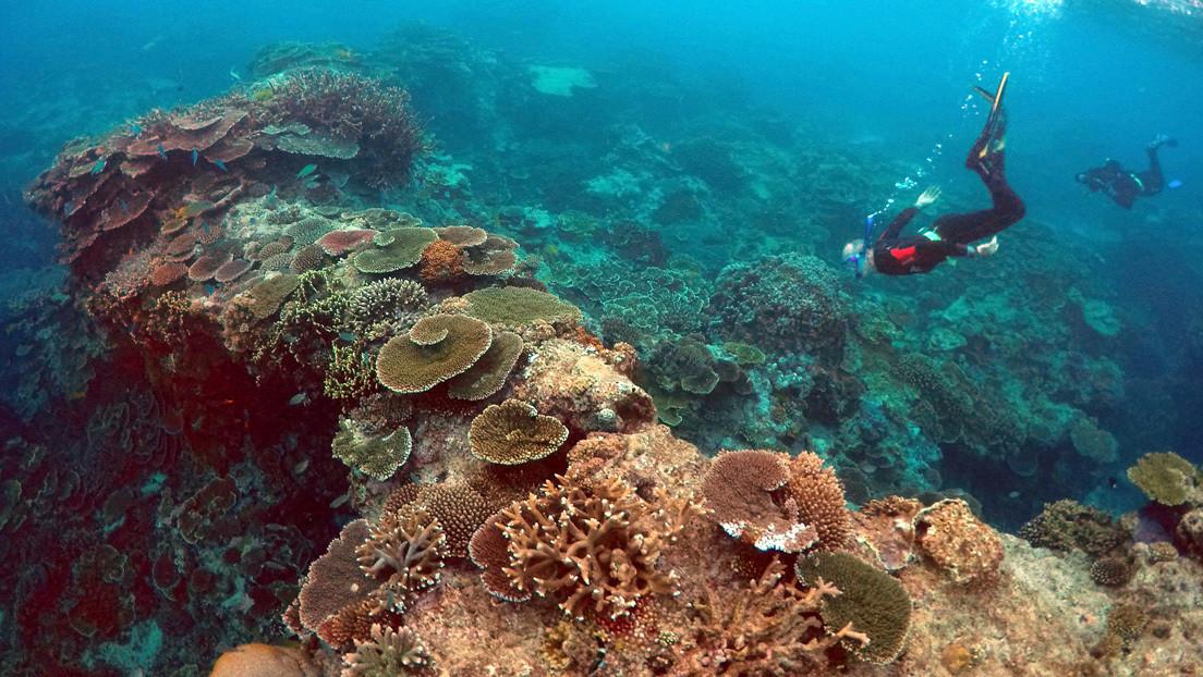 La Gran Barrera de Coral reduce su población en más de la mitad durante los últimos 25 años