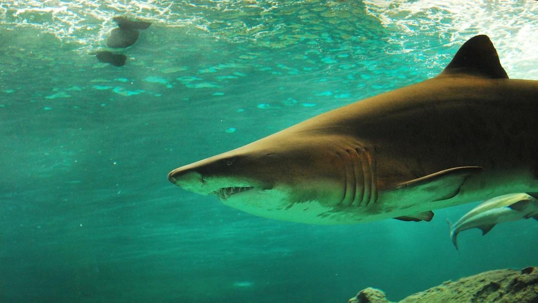 VIDEO: Gran tiburón blanco intenta romper una jaula con tres turistas adentro