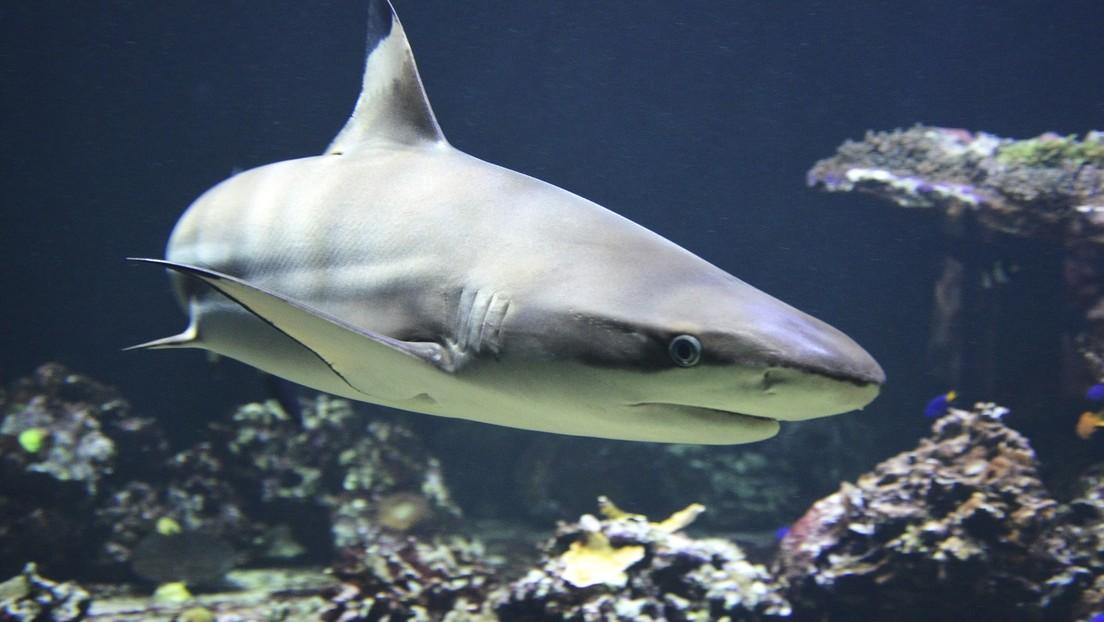 Ataques de tiburones baten récord de 86 años en Australia