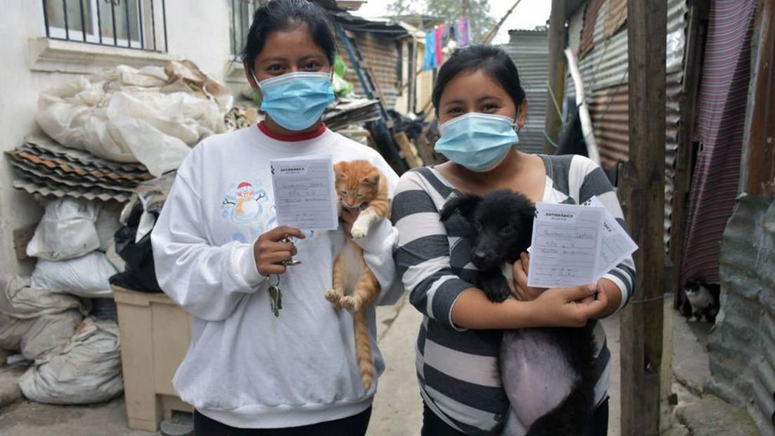 FOTO: Un perrito va en tapabocas a una jornada de vacunación y se roba los corazones de la Red