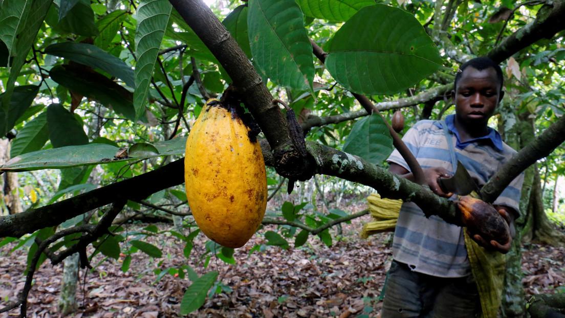 Gran parte del suministro mundial de chocolate depende del trabajo de más de un millón de niños, algunos de tan solo cinco años