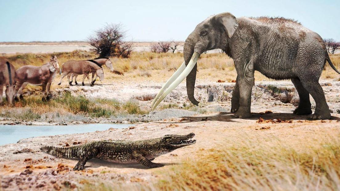 Descubren en España restos de cocodrilos africanos de hace seis millones de años