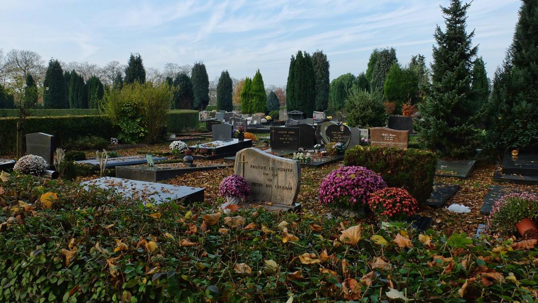 Cientos de clones de un invasivo cangrejo mutante se apoderan de un cementerio en Bélgica