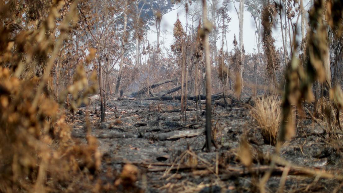 """Un informe acusa a seis instituciones financieras de EE.UU. de tener """"un papel clave"""" en la destrucción de la Amazonía"""