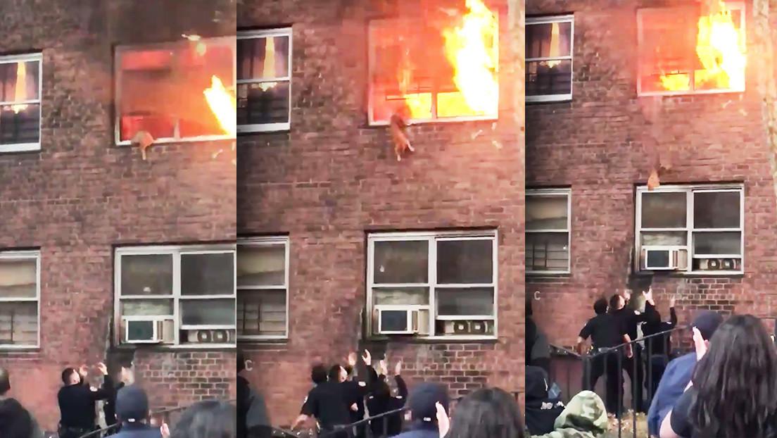 VIDEO: Un gato se salva en el último momento dando un impresionante salto desde su hogar en llamas