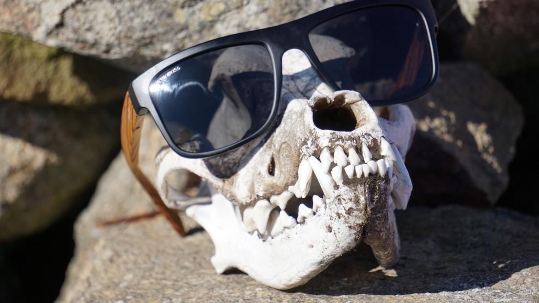 Un cráneo con gafas de sol puesto en la chimenea de una casa resultó ser de un hombre desaparecido ocho años antes