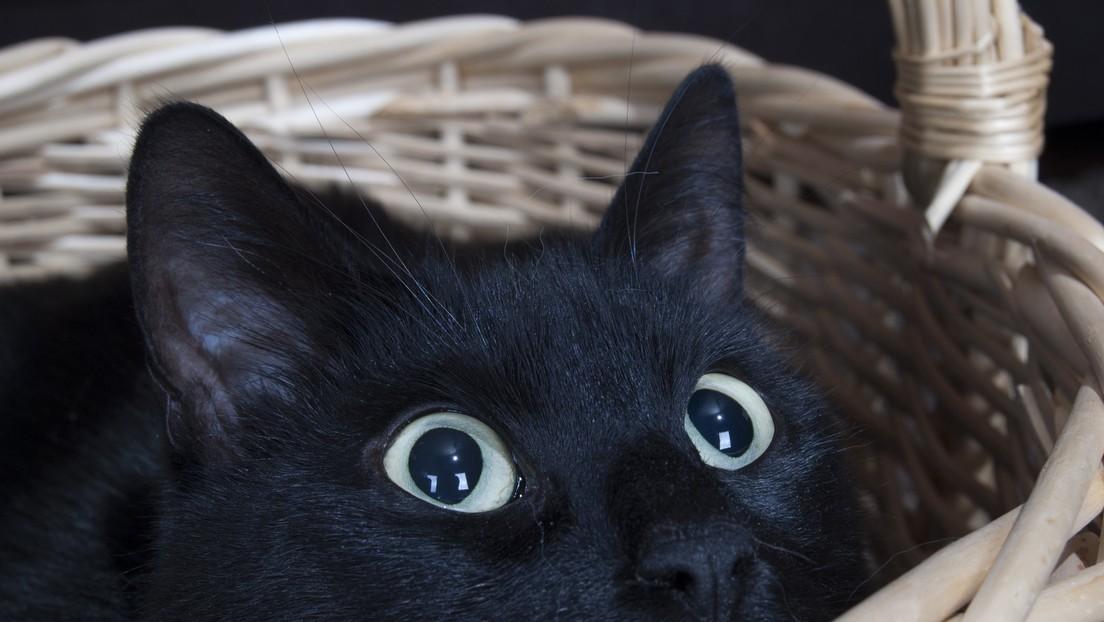 VIDEOS: Esta atlética gata es aficionada a saltar sobre un lugar específico de su casa sin importar lo que se ponga allí