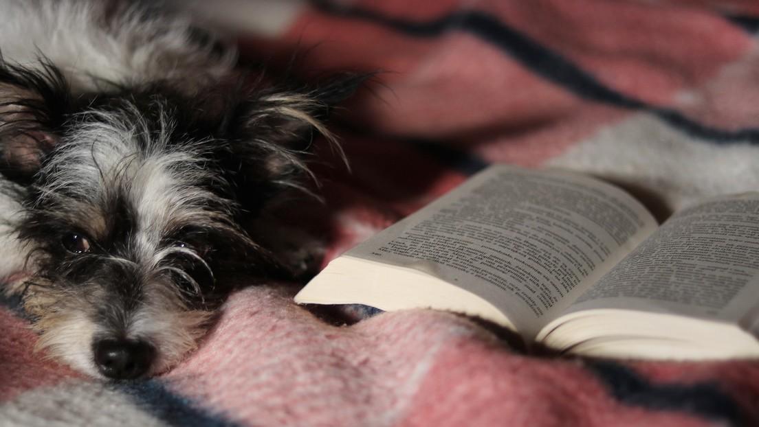 VIDEO: Una veterinaria lee un cuento a un perro enfermo y su gesto se hace viral