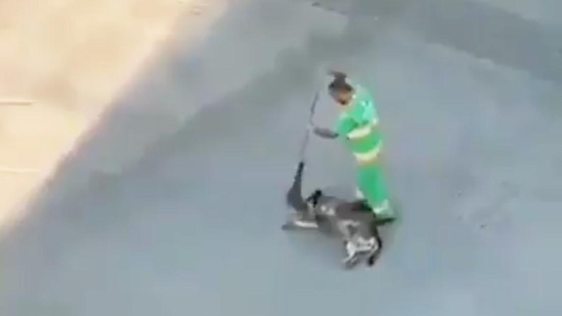VIDEO: La actitud de un barrendero con un perro callejero se hace viral