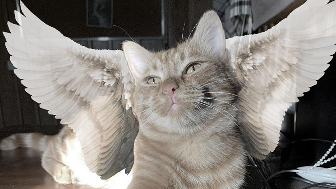 Muere atropellado por un coche Símbochka, el gato 'tiktoker' de Kazajistán amado por millones