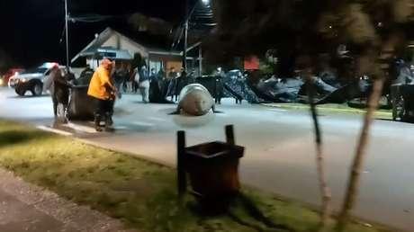 VIDEO: Elefante marino de gran tamaño pasea por las calles de una comunidad chilena y es devuelto al mar - RT