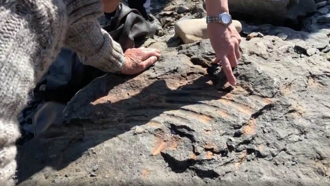 Un niño ruso descubre el fósil de un gran reptil marino prehistórico (VIDEO )