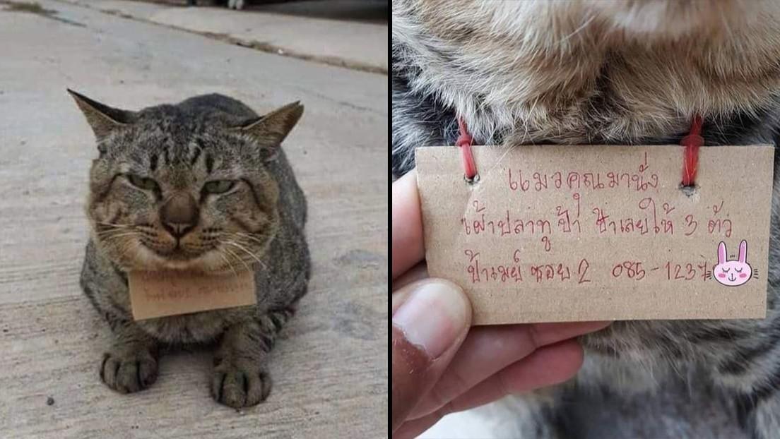 FOTOS: Un gato desaparece por tres días y regresa a casa 'endeudado' por pescado