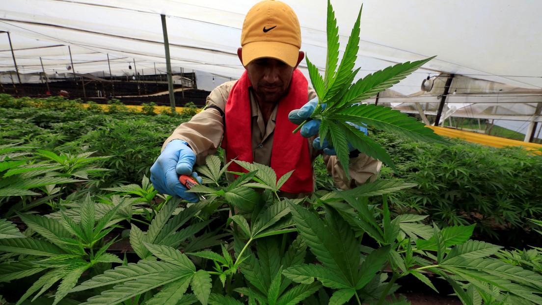 Colombia frena una propuesta legislativa para legalizar el uso recreativo de la marihuana