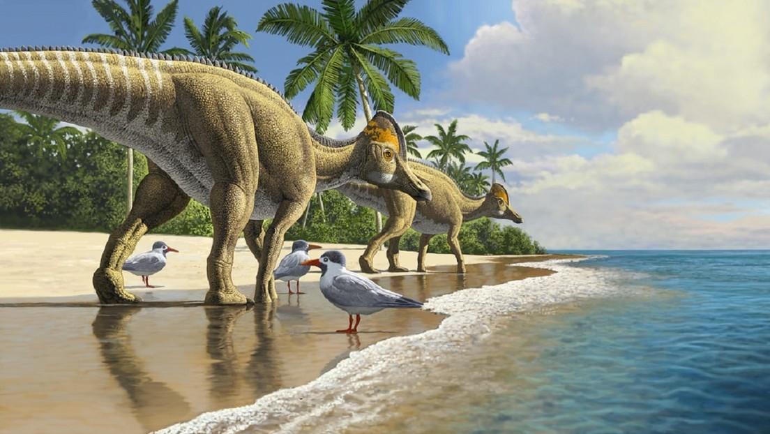 Descubren en Marruecos una desconocida especie de dinosaurio pico de pato que vivió hace  66 millones de años