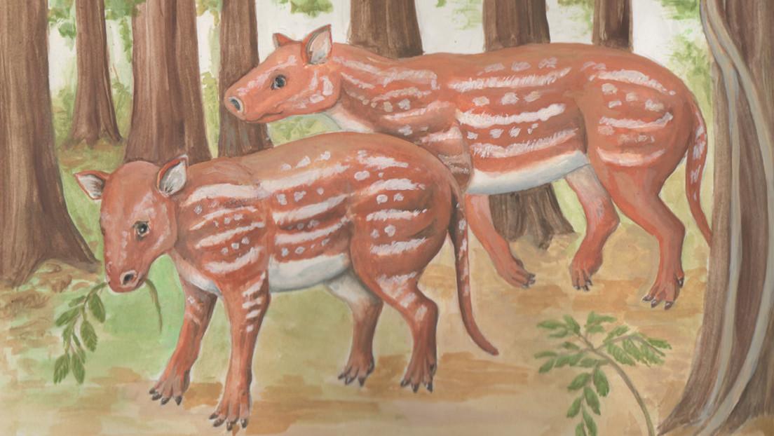 El antepasado común de los caballos, tapires y rinocerontes habitaba en la India cuando aún era una isla a la deriva hacia Eurasia