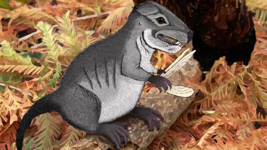Descubren una nueve especie precursora de los mamíferos contemporáneos que vivió hace más de 220 millones de años