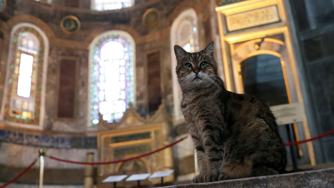 Estambul dice adiós a la gata Gli, la famosa guardiana de la basílica de Santa Sofía