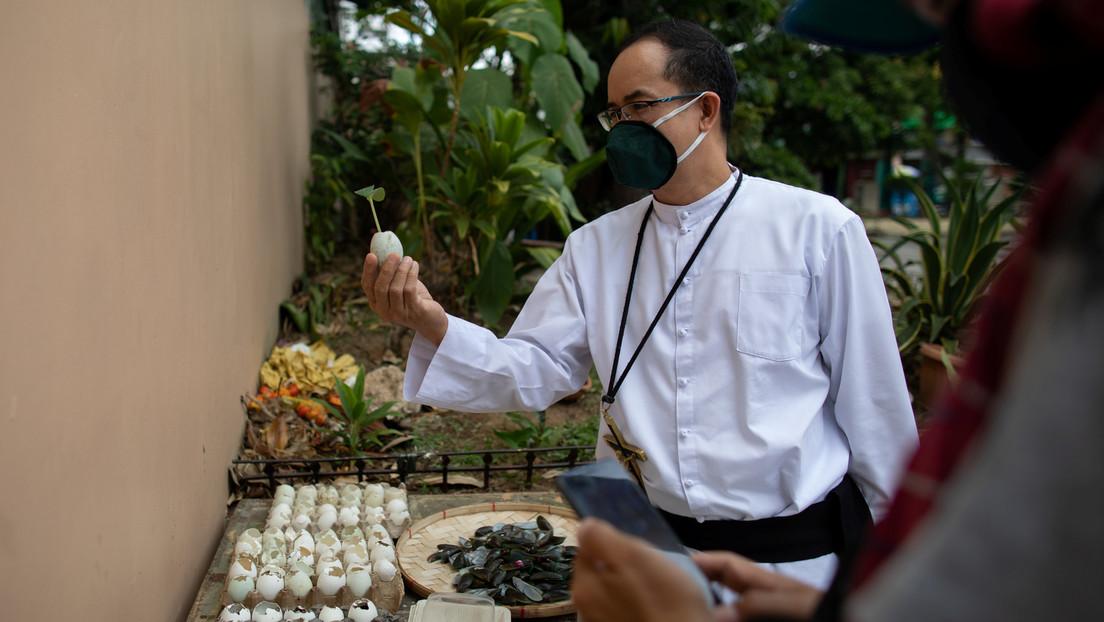 La pandemia de coronavirus provoca un bum de la jardinería en Filipinas