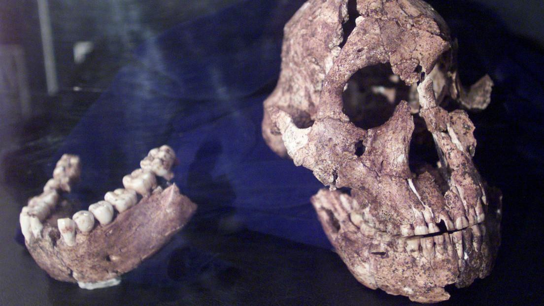 Descubren que un cráneo de hace dos millones de años perteneció a un 'primo' ancestral de los humanos