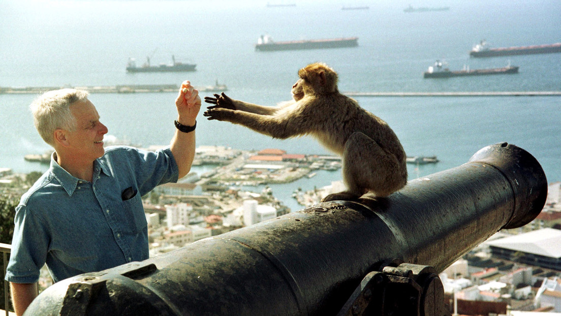 Autoridades de Gibraltar advierten que los macacos de Berbería podrían ser sacrificados por el coronavirus
