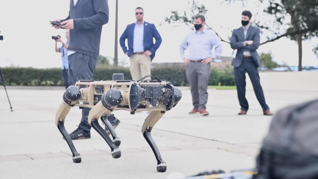 ¡Cuidado con el robot guardián!: Una base de EE.UU. usa perros mecanizados para vigilar su territorio (VIDEO)
