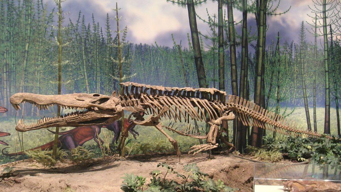 Estiman que la extinción que abrió la puerta al Jurásico ocurrió más tarde de lo pensado
