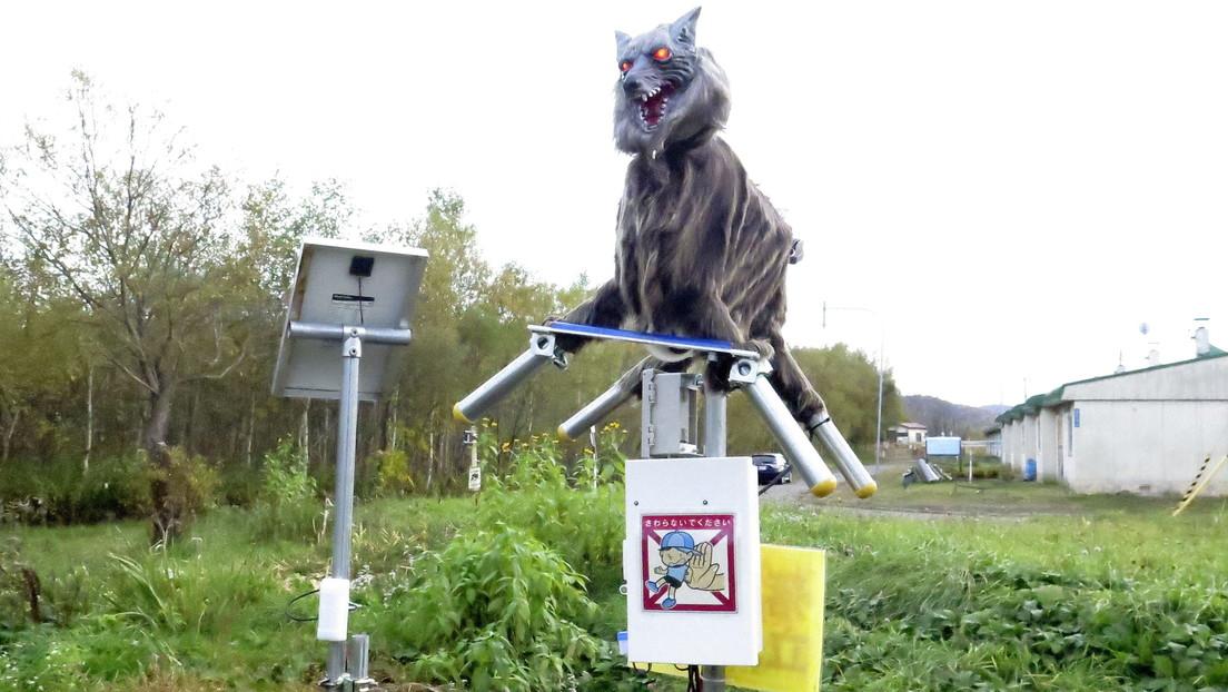 FOTOS, VIDEO: Introducen en una ciudad japonesa monstruosos lobos robot para ahuyentar a los osos