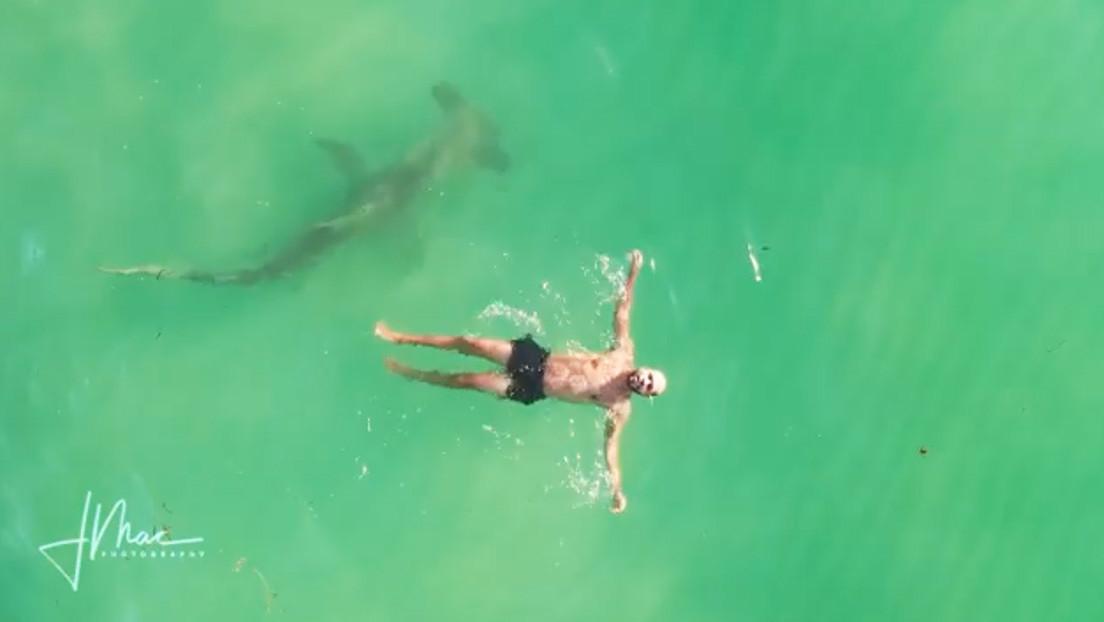 VIDEO: Un tiburón martillo de 3 metros rodea a un hombre que nadaba plácidamente de espaldas
