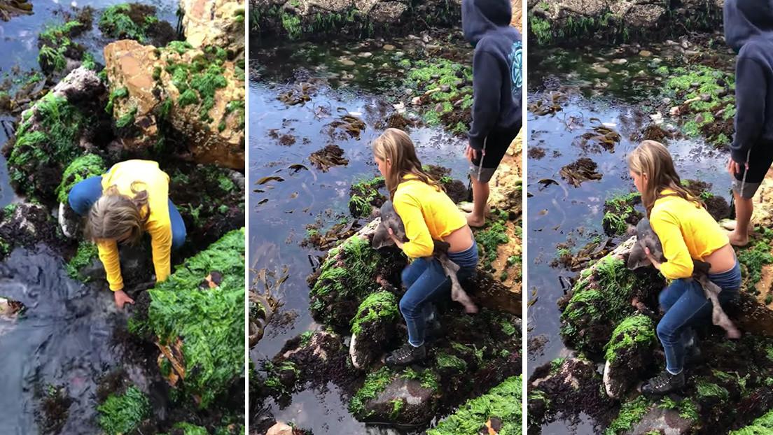 Una niña salva a un tiburón atrapado entre piedras de aguas poco profundas (VIDEO)