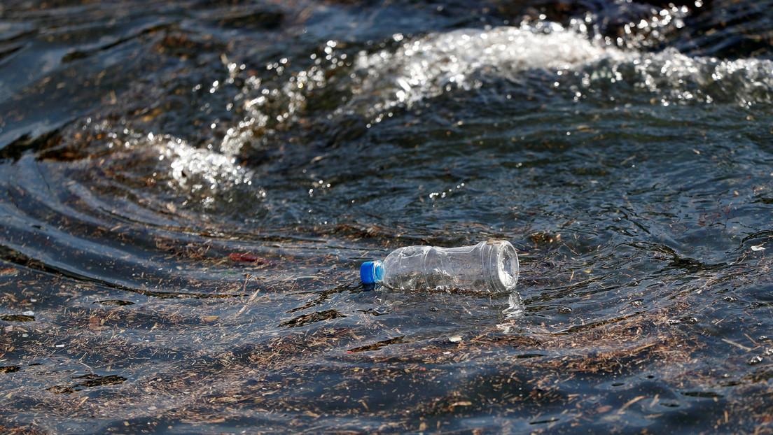 Para salvar los océanos: lanzan una cartera incrustada de piedras preciosas y hecha con piel de cocodrilo por un precio de 6 millones de euros