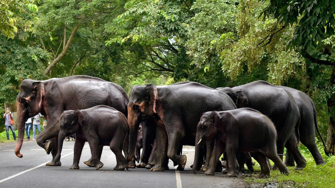 VIDEO: Una multitud ataca con antorchas y flechas a una manada de elefantes en la India