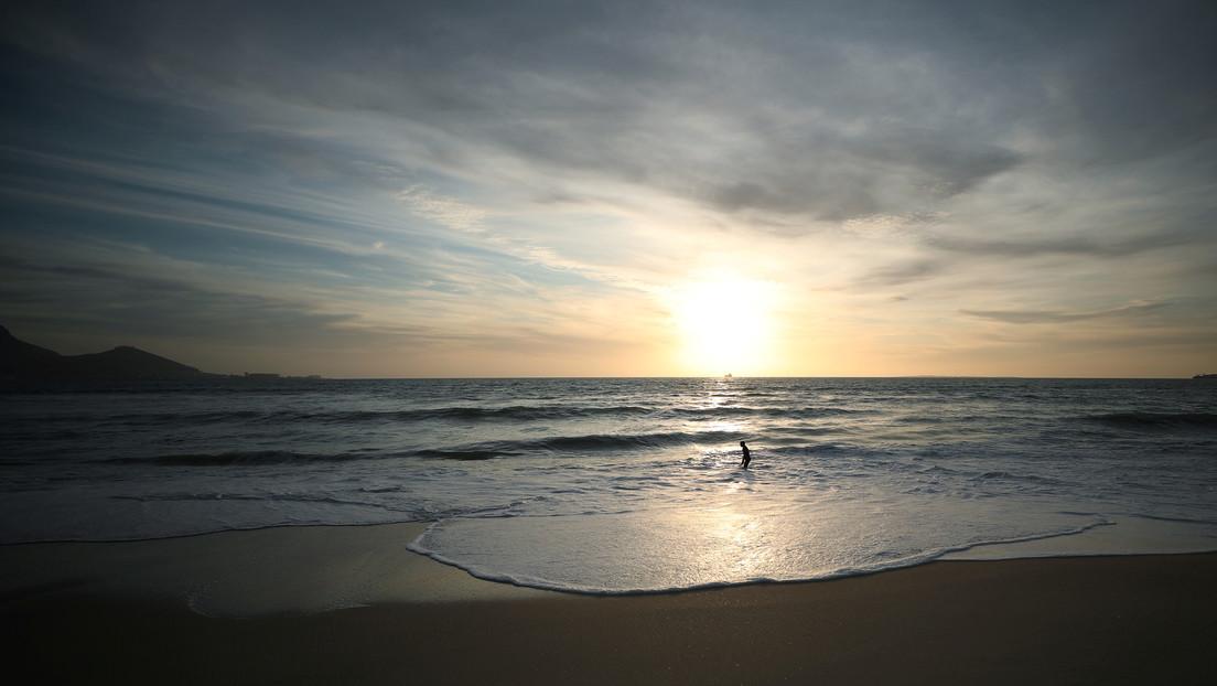 En una playa de Sudáfrica encuentran una rara especie marina conocida como 'dragón azul'