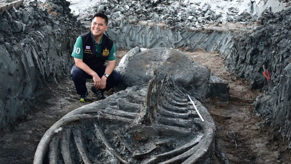 Hallan en Tailandia el fósil de una ballena de hace al menos 3.000 años y perfectamente conservada (FOTOS)
