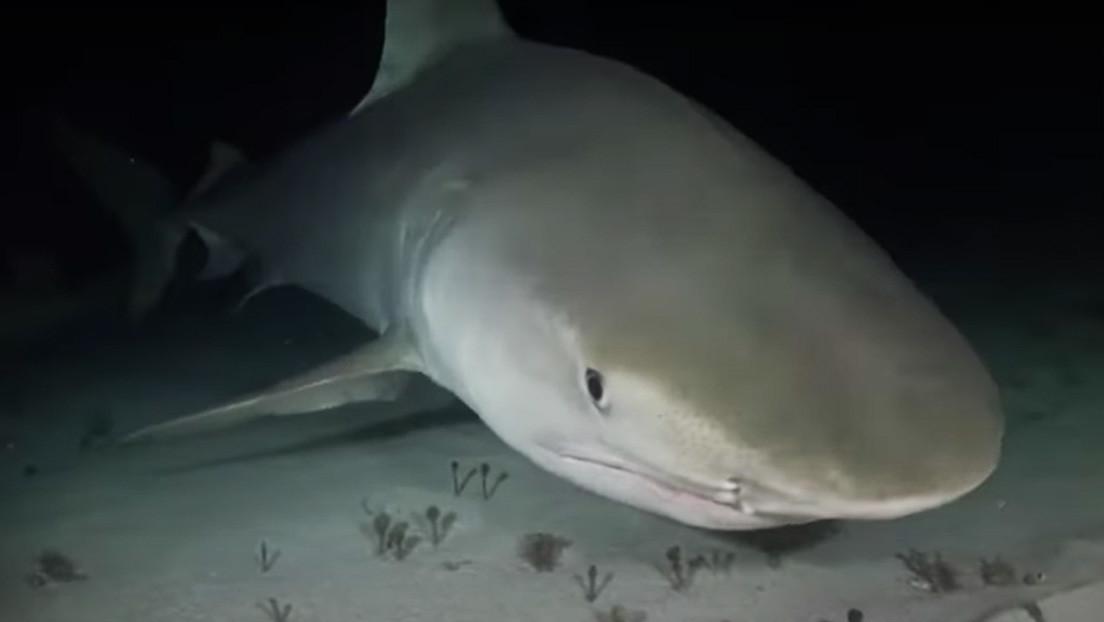 El inusual pez que devora todo y a todos en el triángulo de las Bermudas e incluso puede atacar a submarinos