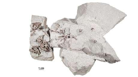 Nueva evidencia fósil indica que los mamíferos ya eran seres sociales desde hace más de 75 millones de años