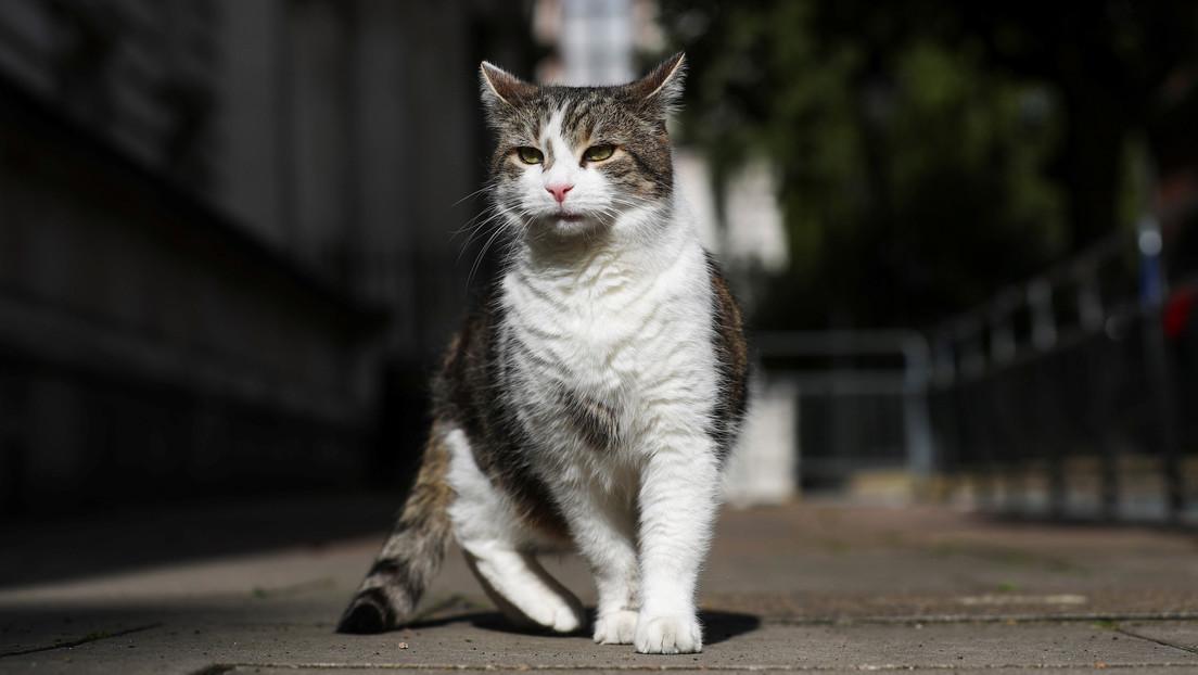Una gata que estuvo extraviada durante 7 años se reencuentra con su familia