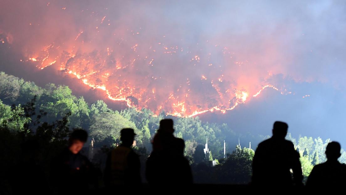 """La ONU advierte que la humanidad libra una guerra """"suicida"""" contra la naturaleza y pide """"un salto cuántico"""" hacia la sostenibilidad en 2021"""