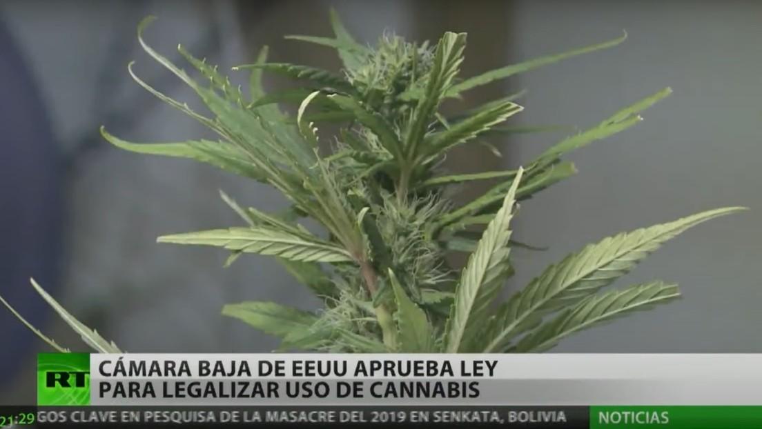 La Cámara de Representantes de EE.UU. aprueba ley para legalizar el uso del cannabis