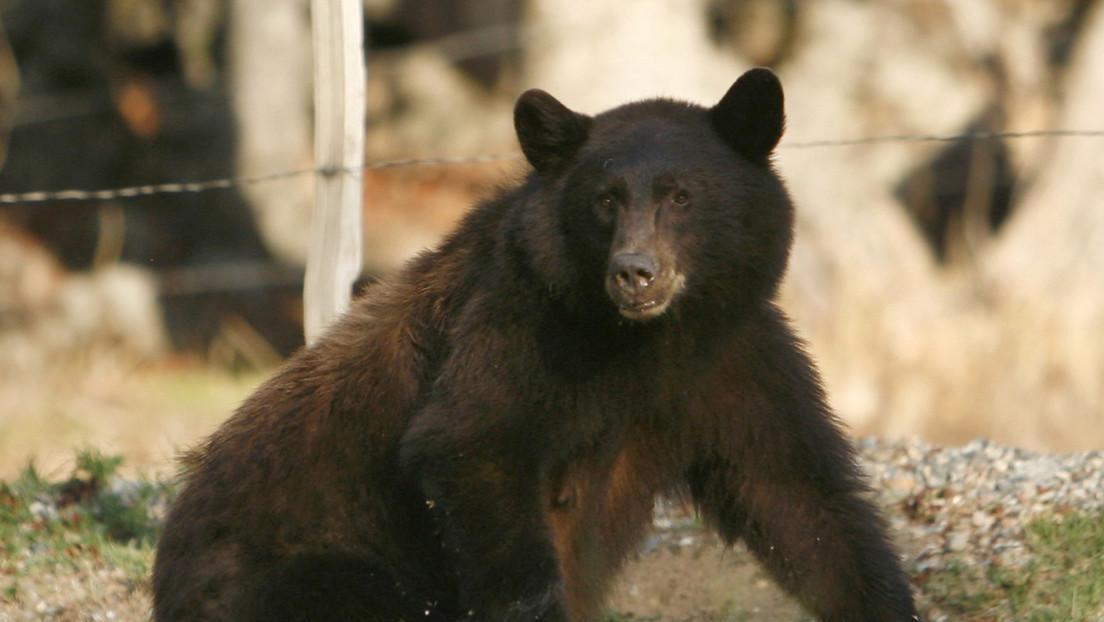 """Hombre """"agarra de la garganta y golpea en la cara"""" a un oso para salvar a su perro"""