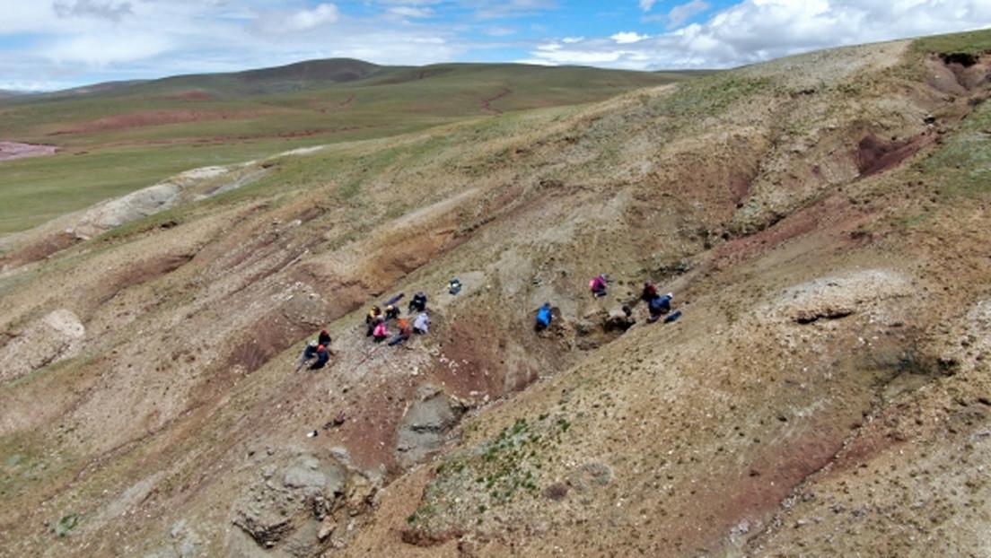 Hallan en el Tíbet rastros de un ecosistema al estilo Shangri-La, que data de hace 47 millones de años