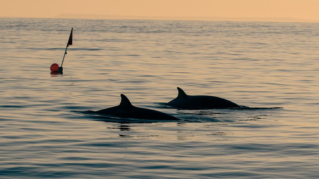 Científicos afirman haber encontrado una nueva especie de ballena frente a las costas de México