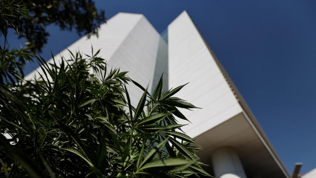 La Suprema Corte de México da una nueva prórroga al Congreso para aprobar la regulación del cannabis