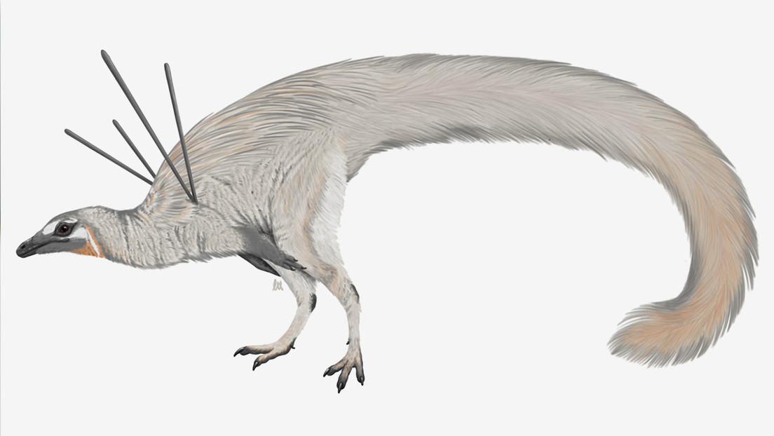 Descubren un dinosaurio 'elegante' que lucía un vistoso pelaje y largas espinas en los hombros