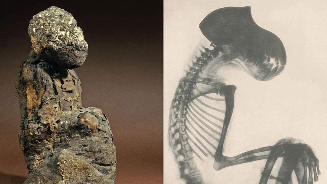 Restos momificados de babuinos arrojan luz sobre la ubicación de la 'Tierra de Dios', un país que fue un importante socio comercial del Antiguo Egipto