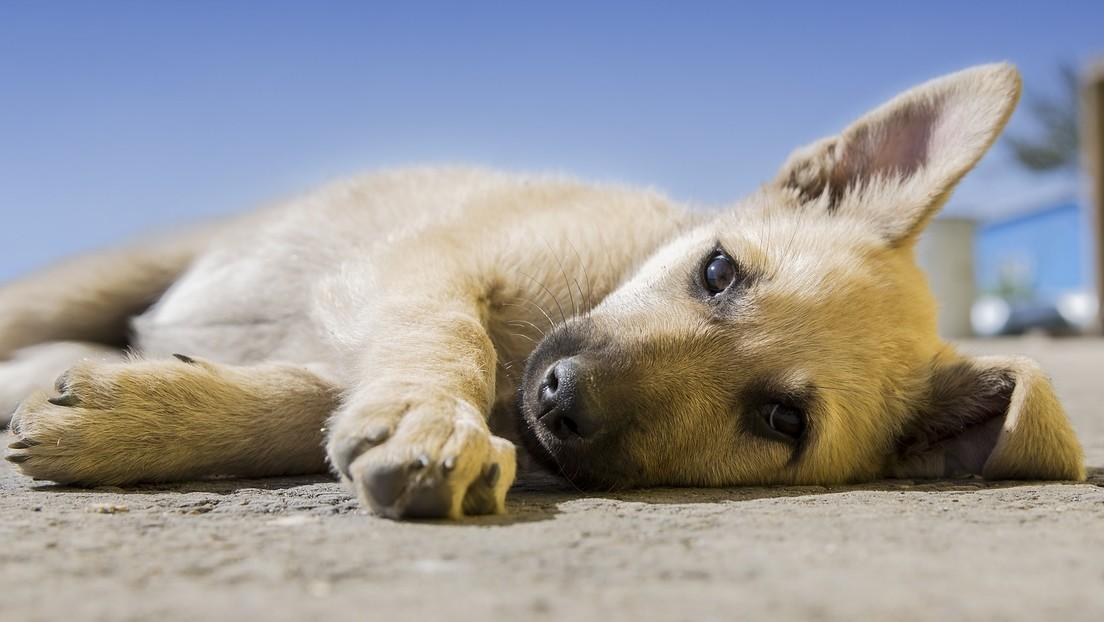 FOTOS: Encuentran un cachorro callejero dormido en un pesebre navideño y le consiguen un nuevo hogar
