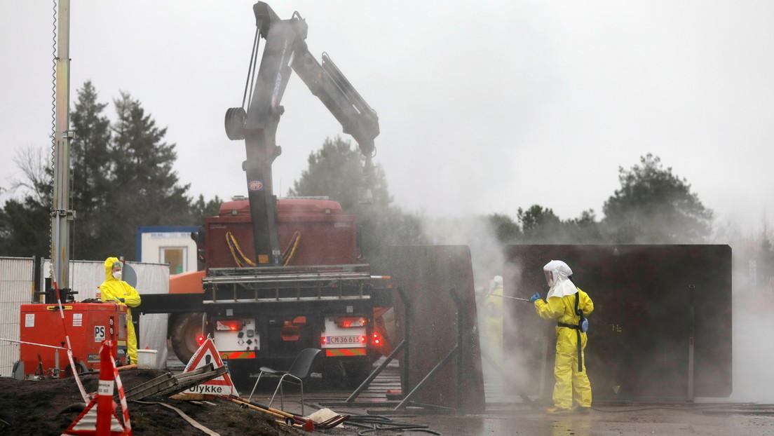 Dinamarca ordena exhumar e incinerar a millones de visones sacrificados por temor al coronavirus