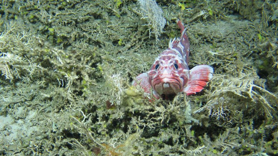 FOTOS: Descubren 12 nuevas especies en las profundidades del Atlántico Norte