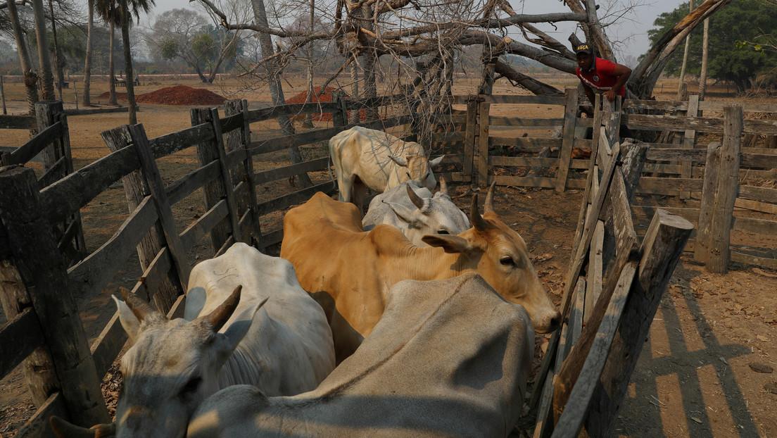 Denuncian condiciones de esclavitud en ranchos ganaderos que proveen a los mayores productores de carne de Brasil